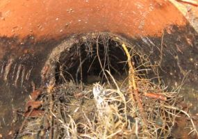 root-infestation-in-drainage-pipe-lanes-group